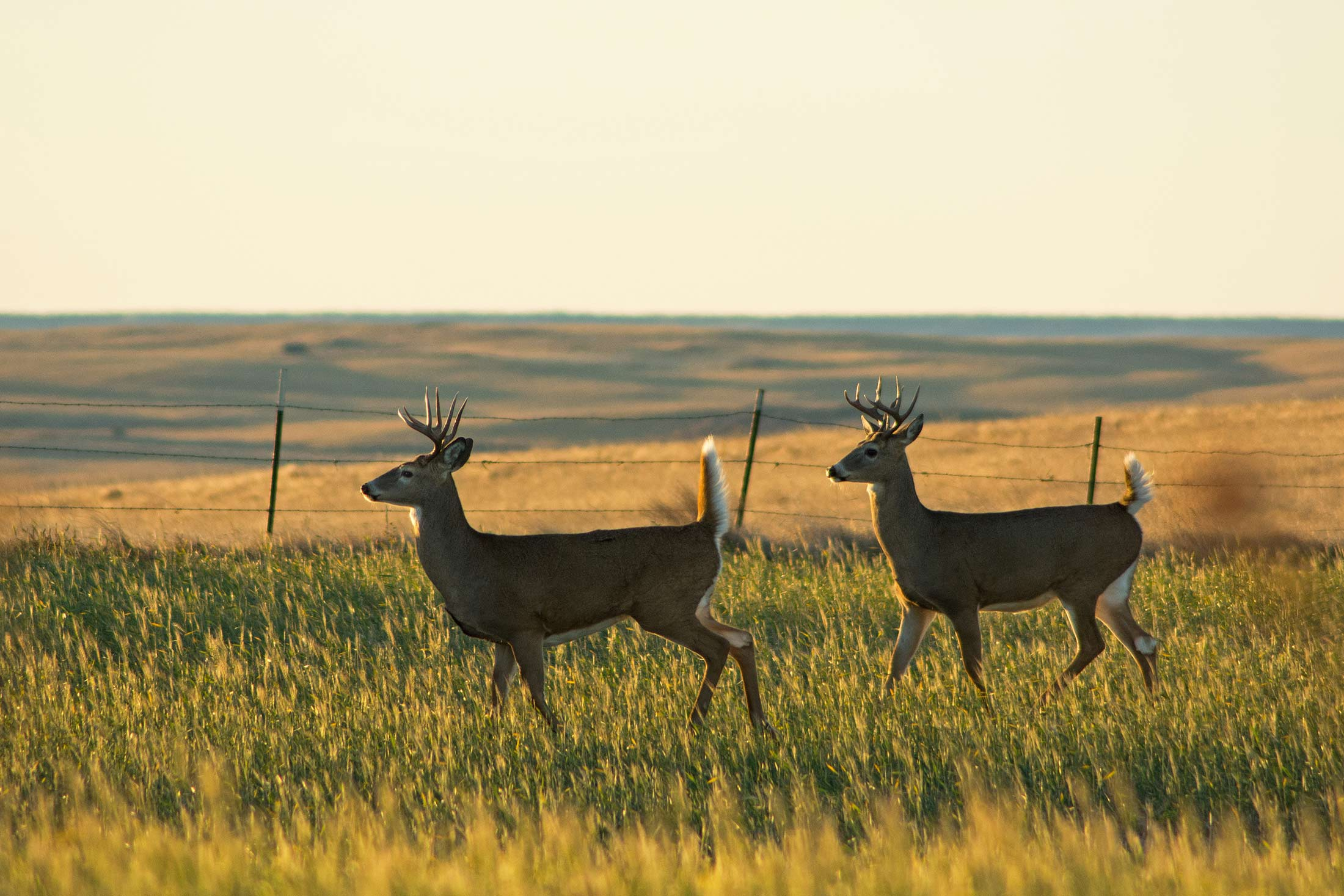 Wildlife in Montana's Missouri River Country